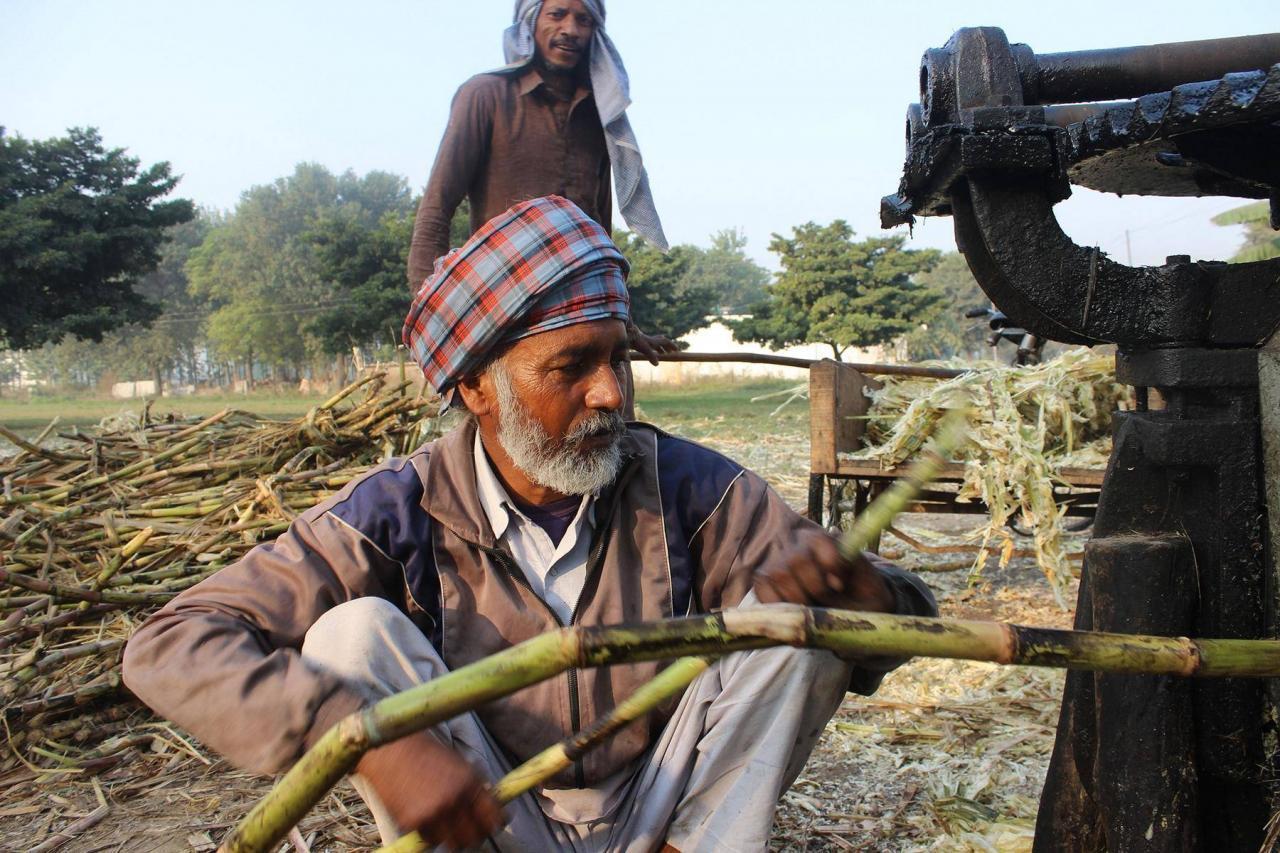 Zuckerrohrmelasse-ist-ein-Nebenprodukt-bei-der-Zuckerproduktion-und-kommt-aus-Asien-1280x853.jpg
