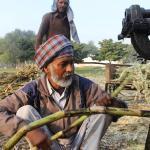 Zuckerrohrmelasse ist ein Nebenprodukt bei der Zuckerproduktion und kommt aus Asien