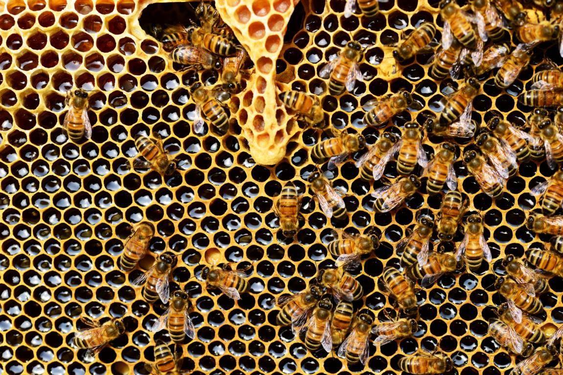 Honig ist ein relativ guter Zuckerersatzstoff